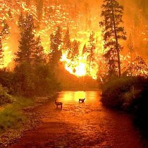 incendio_bosco_animali